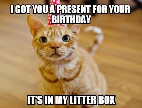 50 Best Funny Happy Birthday Memes